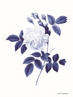 Blue Botanical II Fine-Art Print