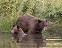 Black Bear Sow and Cub II Fine-Art Print