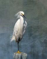 Snow Egret Fine-Art Print