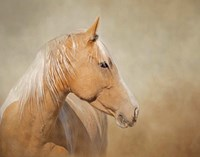 Silk - Mustang Mare Fine-Art Print