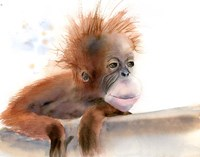 Baby Monkey Fine-Art Print