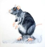 Rat II Fine-Art Print