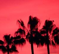 Neon Palm Trees III Fine-Art Print