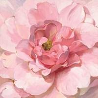 Blushing Peony Fine-Art Print