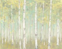 Sylvan Birches Fine-Art Print