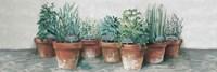 Pots of Herbs II Cottage v2 Fine-Art Print