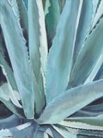 Blue Agave Fine-Art Print