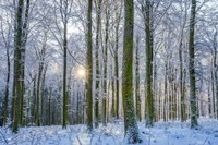 Frosty Forest Fine-Art Print