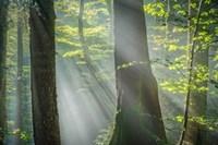 Shower of Light Fine-Art Print
