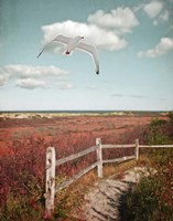 Gull over Coastal Trail Fine-Art Print