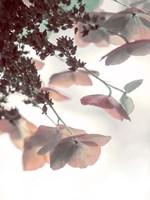 Pink & Aqua Hydrangeas Fine-Art Print