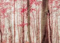 Pink & Brown Fantasy Forest Fine-Art Print