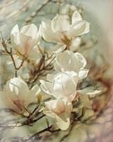 Vintage Inspired Magnolias Fine-Art Print