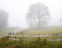 Foggy Rural Scene Fine-Art Print