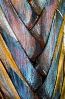 Palm Puzzle Fine-Art Print