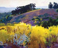 Late Sun, Eucalyptus on the Ridge Fine-Art Print