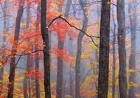 Fire in the Fog Fine-Art Print