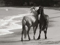 Young Mustangs on Beach Fine-Art Print