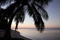 Palm Tree Sunset Fine-Art Print