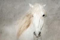 Stallion Face Fine-Art Print