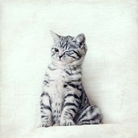 Cat Winks Fine-Art Print