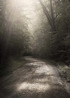 Back Country Road Fine-Art Print