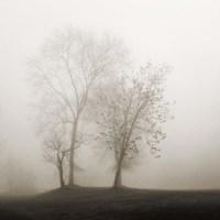 Four Trees in Fog Fine-Art Print