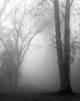 November Fog Fine-Art Print