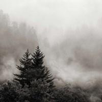 Rising Mist, Smoky Mountains Fine-Art Print