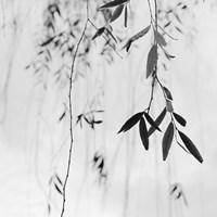 Willow Print No. 3 Fine-Art Print