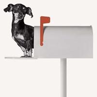 You've Got Mail Fine-Art Print