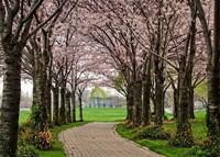 Cherry Blossom Path Fine-Art Print