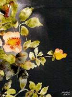 Roses on Black Fine-Art Print