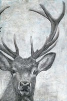 Portrait of a Deer Fine-Art Print