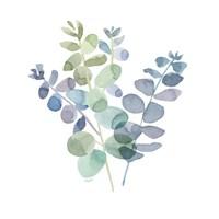 Natural Inspiration Blue Eucalyptus on White II Fine-Art Print