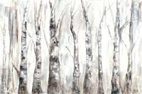 Winter Aspen Trunks Neutral Fine-Art Print