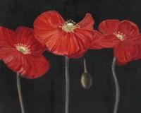 Poppy Trio I Fine-Art Print