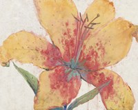 Blooming Lily Fine-Art Print