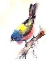 Bunting Bird Fine-Art Print