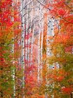 Autumn Passage Fine-Art Print
