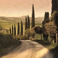 Country Lane, Tuscany Fine-Art Print
