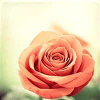 My Perfect Rose Fine-Art Print