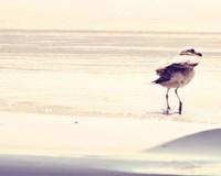 Bird at The Beach Fine-Art Print