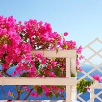 Santorini Blooms Fine-Art Print