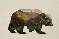 North American Brown Bear Fine-Art Print