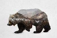 The Kodiak Brown Bear Fine-Art Print