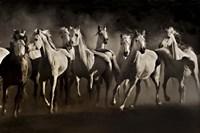 Dream Horses Fine-Art Print
