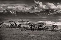 Mountain Range Mavericks Fine-Art Print