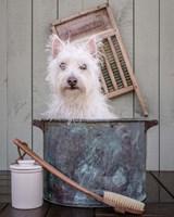 Washing the Dog Fine-Art Print