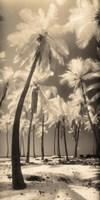 Palm Shadows I Fine-Art Print